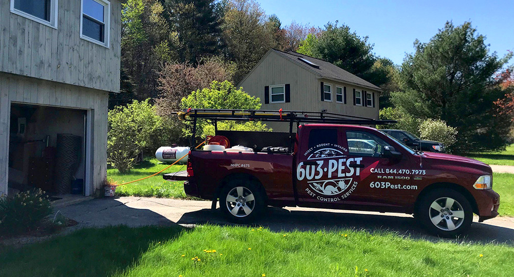 603 Pest on a preventative service visit to get rid of yellow jackets in Merrimack, NH.