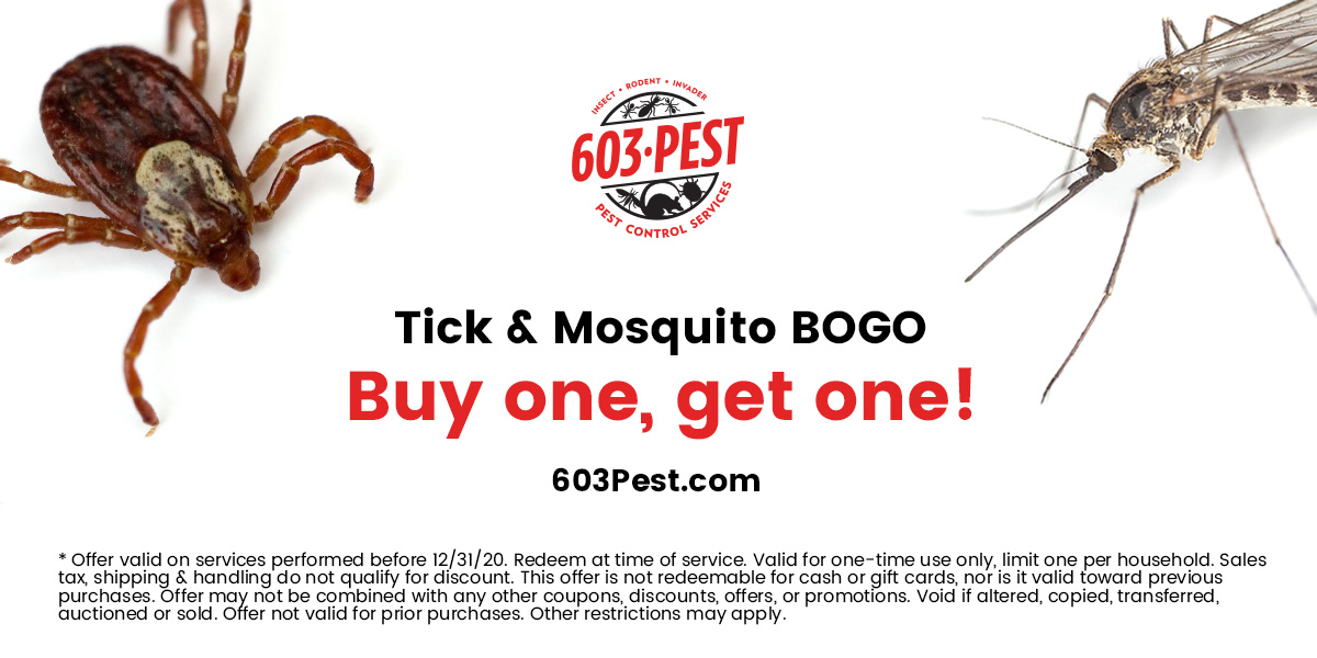 603 Pest Control Services Promotion 2020, ticks and mosquitos