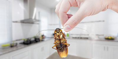 Are You Attracting Pests to Your Home?
