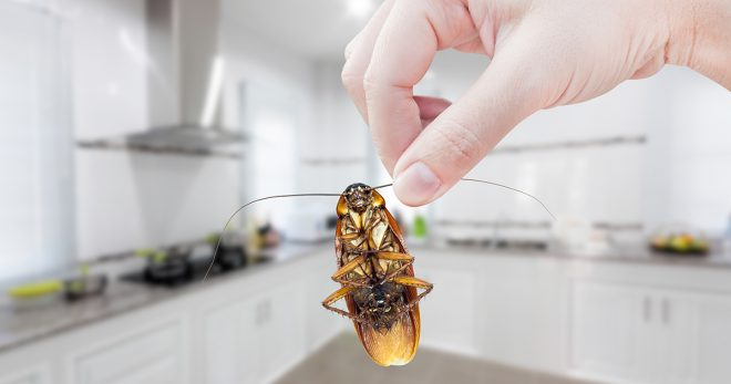 In New Hampshire, if you aren't careful, your home could become a prime target. To avoid inadvertently rolling out the welcome mat for these pesky pests, review our tips to help keep your home pest-free.