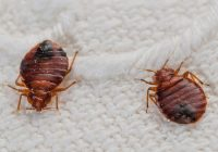 The bed bug is a near-perfect pest: quiet, hard to find, increasingly pervasive, and an egg-producing machine. 603 Pest Control can eliminate the bed bugs.