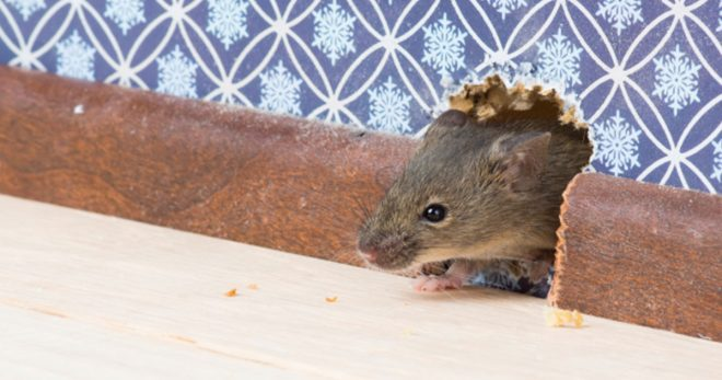 experts in pest control for mice in New Hampshire