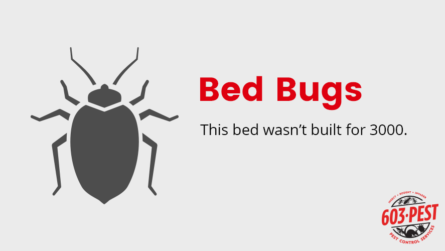 Bed Bugs are Not Welcome  Learn the Signs and Call 603 Pest